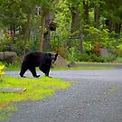 Bear Out Front by Imagery