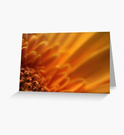Gerbera I Greeting Card