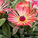 Orange flower #1 by Chanzz
