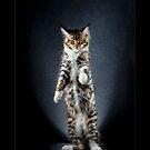 « CATS - PELE ©alexisreynaud.com » par Alexis Reynaud