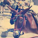 Santorini Donkey by colorcodesigns