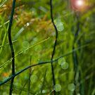 Garden Fence by ericafaye