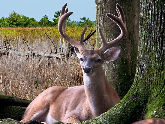 BUCK In The Woods by TJ Baccari Photography