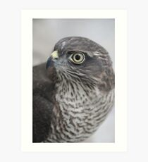 Sparrowhawk 'Buffy' Art Print