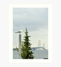 Seagull in Mackinaw Art Print