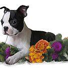 pretty puppy  by Cazzie Cathcart