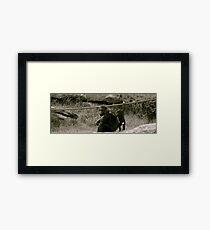 Cuddle. Framed Print