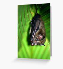 Tent-making Bat - Costa Rica Greeting Card