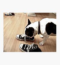 Dexter's Kicks Photographic Print