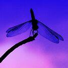Dragonfly at Dusk by Marcia Rubin