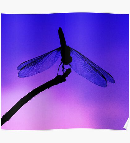 Dragonfly at Dusk Poster