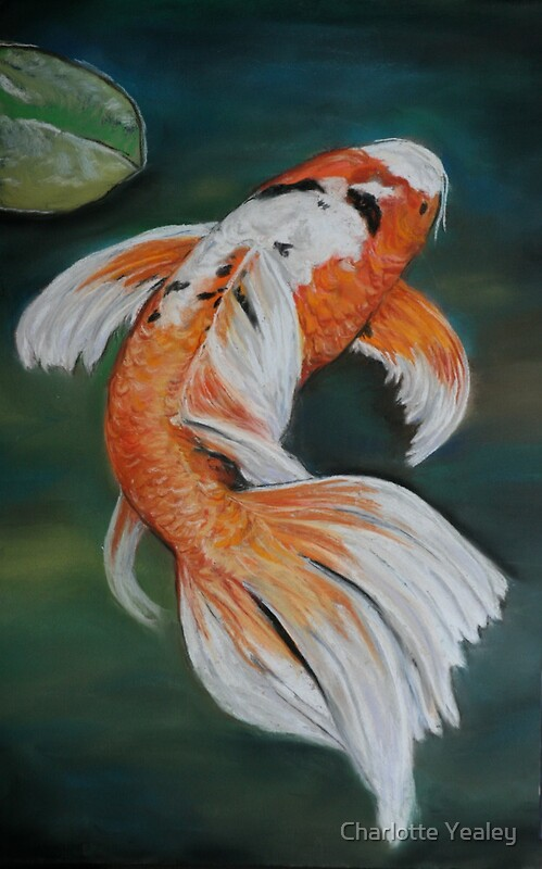 Ella the butterfly koi by charlotte yealey redbubble for Baby butterfly koi