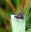 More Bug Luv by Marcia Rubin