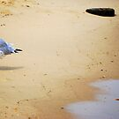 Baby Seagull Pondering Life by Sunshinesmile83