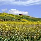 Wild Mustard in the Spring by Cupertino