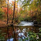 Arkansas Stream by Lisa G. Putman