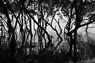 Moreton Bay Mangroves by Renee Hubbard Fine Art Photography