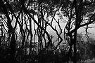 Moreton Bay Mangroves by Extraordinary Light