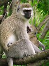 Mother and Baby Vervet Monkey by Jennifer Sumpton