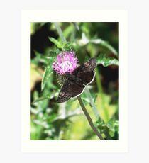 Funereal Duskywing Butterfly Art Print