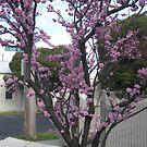 Blossom Tree by Julietmsampson