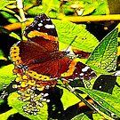 The Butterfly by Trevor Kersley