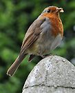 a robin in the rain by Kyoko Beaumont