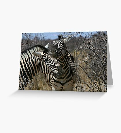 Zebra Romance Greeting Card