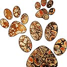 Paw Prints by bcolor