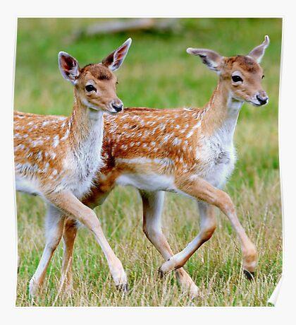 The deer parade Poster