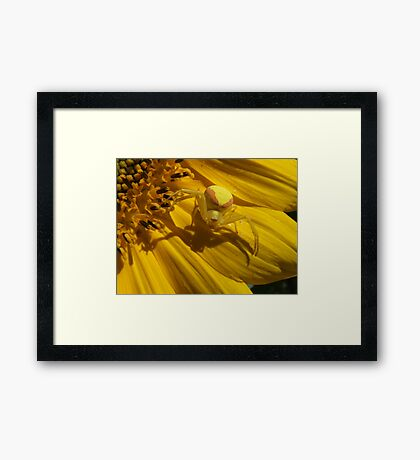 Perfect  Spot For  A Spider  Framed Print