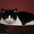 bowl cat by james smith