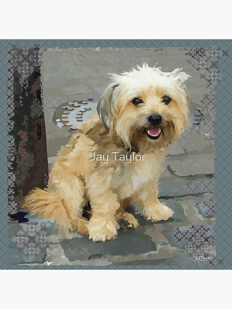 Louie The Shorkie Tzu Shih Tzu Yorkshire Terrier Yorkie Mix