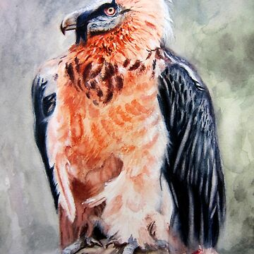 Bearded Vulture watercolour by HeribertoM