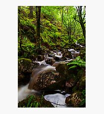 little woodland waterfall Photographic Print