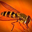 Pollination 10 by Gareth Jones