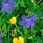 Wildblumen in Tulla, Irland von Cathy Jones