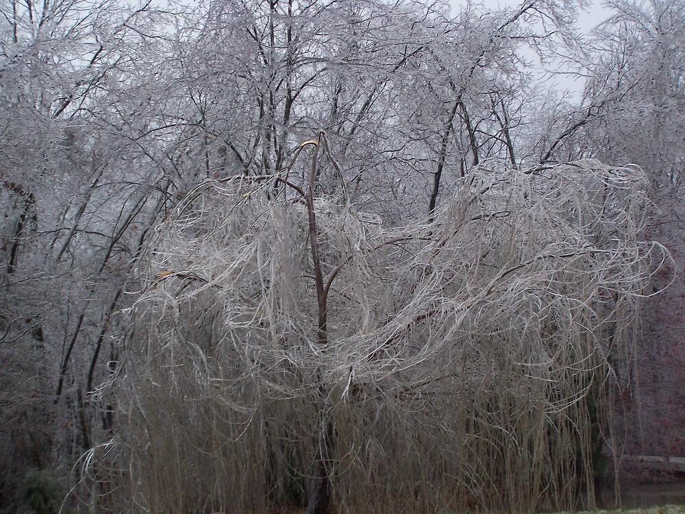 icy willow by Robyn Wilkey