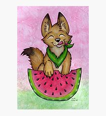 Melon Coyote - A Summertime Treat! Photographic Print