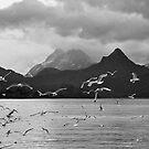 Cry of the Gulls  - Alaskan Seascape by Barbara Burkhardt