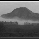 Morning Fog by Karlientjie