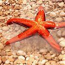 Sea star by aleksandra15