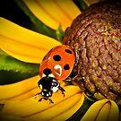 Ladybird by Gareth Jones