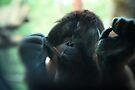 The Softer Side of Orangutangs by KatsEyePhoto