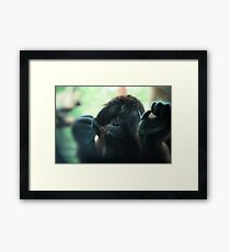 The Softer Side of Orangutangs Framed Print