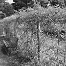 Lonely Bench - Elizabeth Park by DearMsWildOne