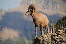 Big Horn Sheep #2 by JimGuy