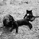 Kittens 2 by DearMsWildOne