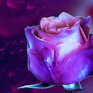 Midnight Rose by AngelinaLucia10