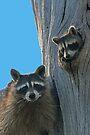 Mom & Baby Raccoon by WorldDesign